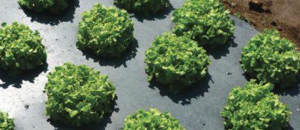 Bioműanyagok – helyzetkép a jelenről és a perspektívákról