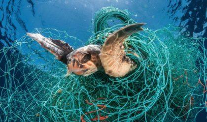 Minden(!) tengeri állatban van műanyag