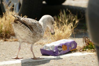 A műanyagszennyezés kockázata az ökoszisztémára