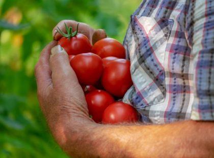Egy programmal támogatja a hazai kistermelőket a Kifli.hu